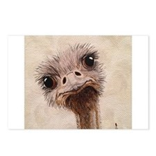 StephanieAM Ostrich Postcards (Package of 8)