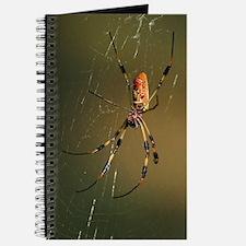 golden orb weaver spider Journal