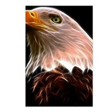 American Bald Eagle Head Postcards (Package of 8)