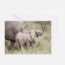 Two Baby Elephants Greeting Card