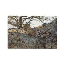Leopard Rectangle Magnet