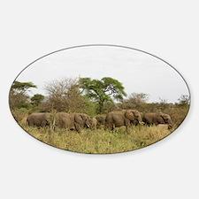 Herd of Elephants Decal