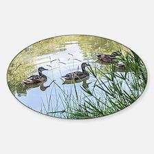 Ducks on a Reflection Pond Sticker (Oval)