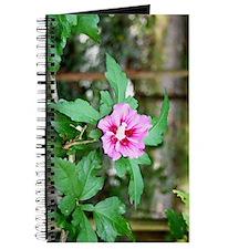 Rose of Sharon Journal
