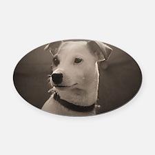 Puppy Portrait Oval Car Magnet