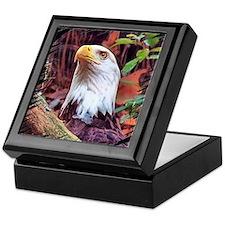 Bald Eagle, portrait Keepsake Box
