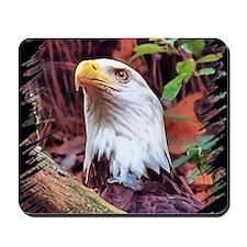 Bald Eagle, portrait Mousepad