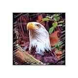 Bald eagle Bumper Stickers