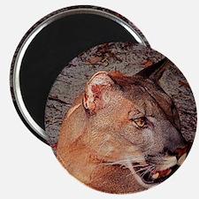 Florida Cougar, Right face 1 Magnet