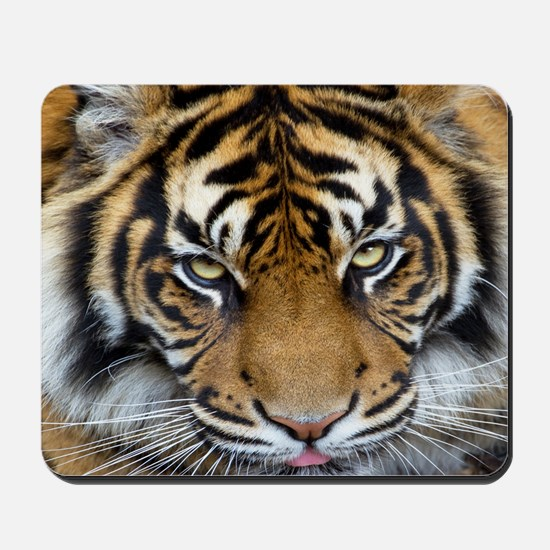 Focus on goal and success Sumatran Tiger Mousepad