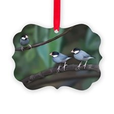 Java Sparrow Ornament