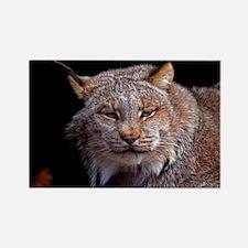 (13) Lynx 9288 Rectangle Magnet
