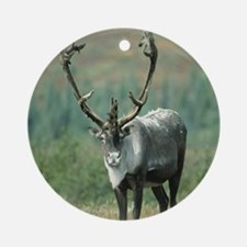 Waiting for your love Caribou anima Round Ornament