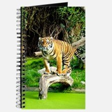 Ready for success Tiger - Copy (3) Journal
