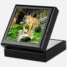 Ready for success Tiger - Copy (3) Keepsake Box