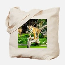 Ready for success Tiger - Copy (3) Tote Bag