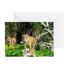 Ready for success Tiger Greeting Card