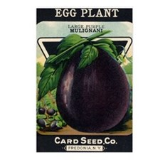 EGGPLANT - Large Purple M Postcards (Package of 8)