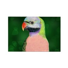 Moustached Parakeet Rectangle Magnet