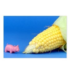 Pig Corn Postcards (Package of 8)