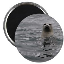 Harbor Seal Magnet