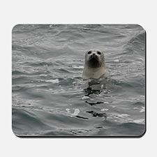 Harbor Seal Mousepad