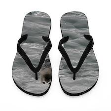 Harbor Seal Flip Flops