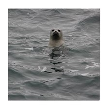 Harbor Seal Tile Coaster