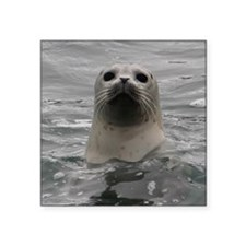"Harbor Seal Square Sticker 3"" x 3"""