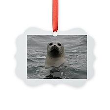Harbor Seal Ornament
