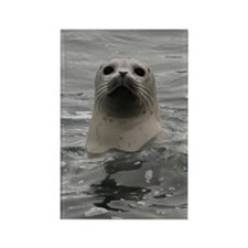 Harbor Seal Rectangle Magnet
