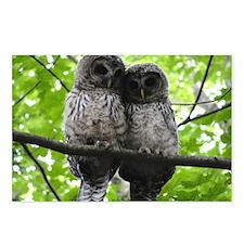 Cuddling Owls Postcards (Package of 8)