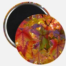 Autumn Leaves 97M Red Colorful Fall Tree Le Magnet
