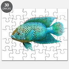 Jack Dempsey Cichlid Fish Puzzle