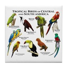 Tropical Birds of Central and South A Tile Coaster