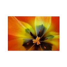 Georgia Tulip Rectangle Magnet