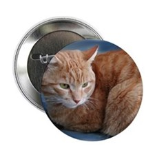 """Funny Cat 2.25"""" Button (10 pack)"""