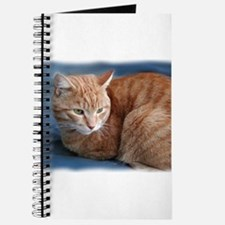 Cute Orange cats Journal