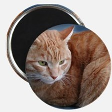 Funny Cats curled up Magnet
