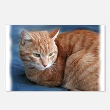 Cute Orange cats Postcards (Package of 8)
