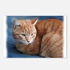 Funny Orange cat Postcards (Package of 8)