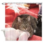 valentine cat Shower Curtain