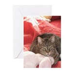 valentine cat Greeting Cards