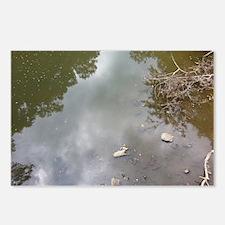 Muddy Water Postcards (Package of 8)