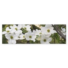 Dogwood Blossoms Bumper Sticker