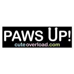 [White Paws] Bumper Bumper Sticker