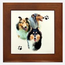 Collie Trio Framed Tile