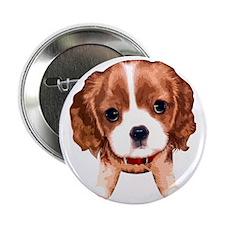 """CavalierKingCharlesSpaniel003 2.25"""" Button"""