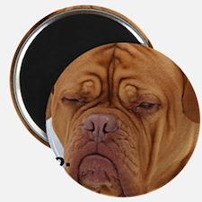 Dour Dogue No. Magnets