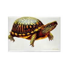 Colorful Eastern Box Turtle Rectangle Magnet